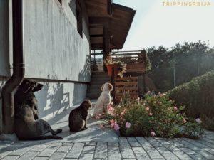zivotinje lozanjske terase